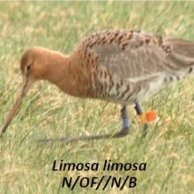 Reserve-Moeze-Oleron-LPO-Controle-LIMLIM