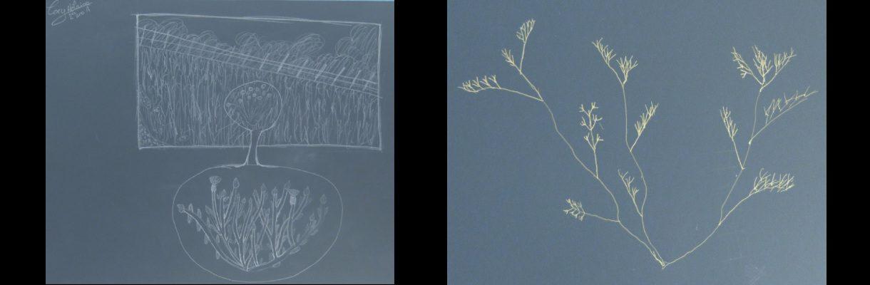 Reserve-Moeze-Oleron-LPO-Herbier-dessine2-caroussel