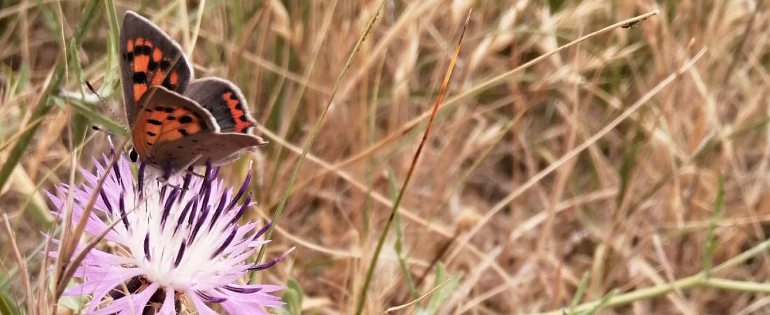 Réserve naturelle de Moëze-Oléron-Biodiversité